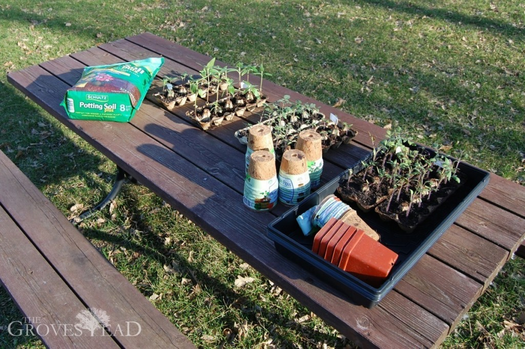 Supplies set out for transplanting seedlings