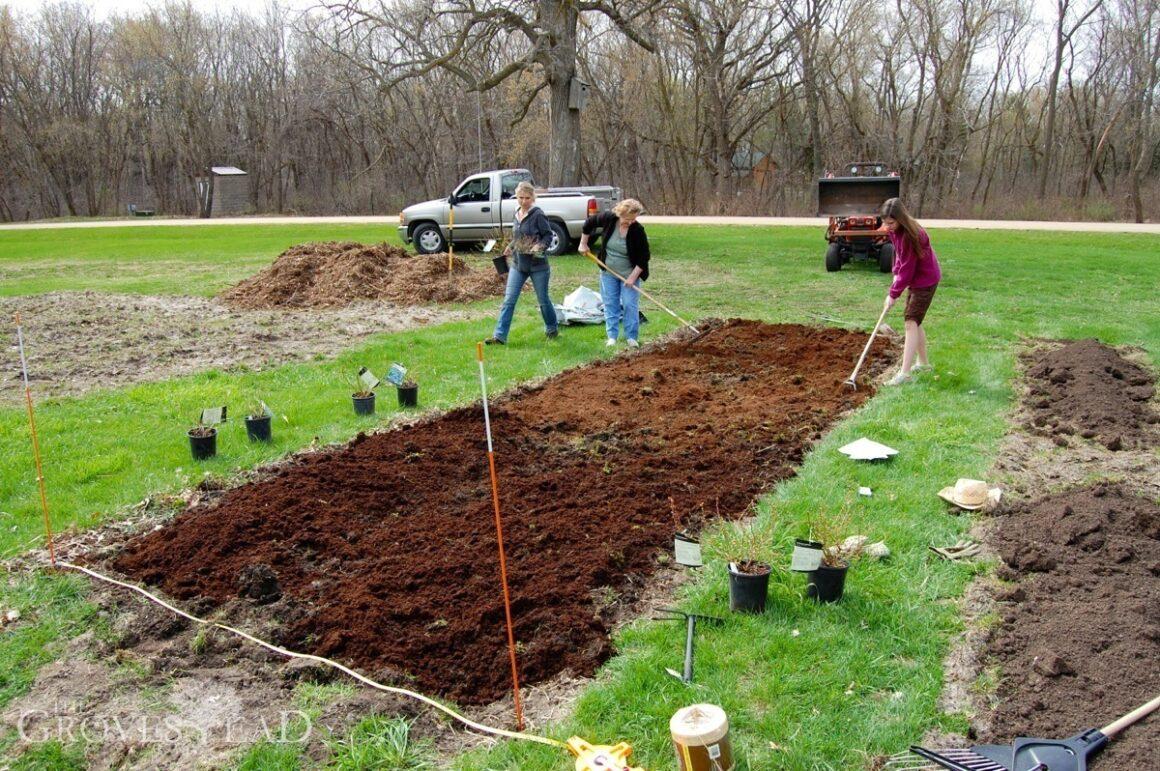 Preparing the soil for blueberries