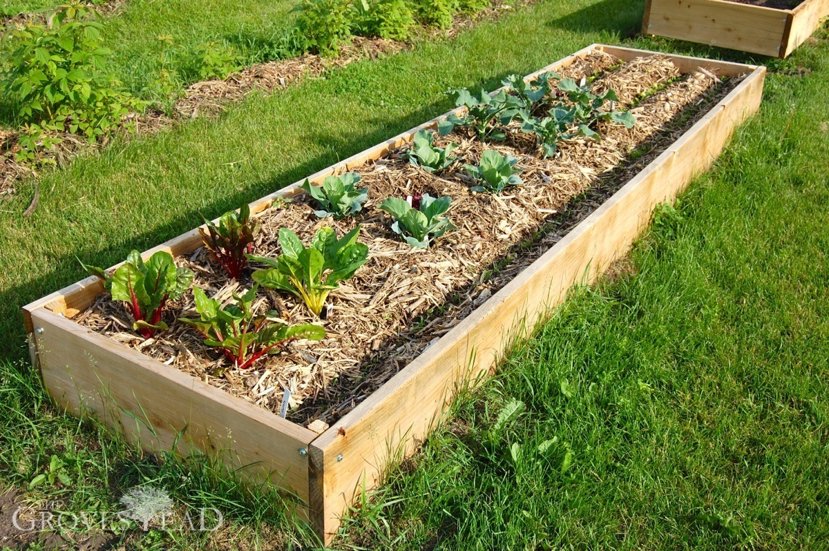Raised Bed Gardens Quick And Easy The Grovestead