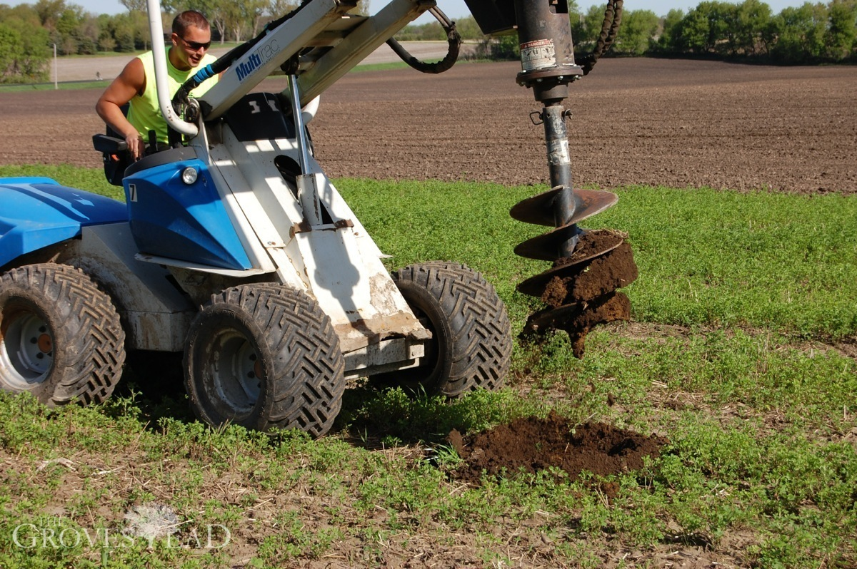 how to prepare soil for fruit tree planting