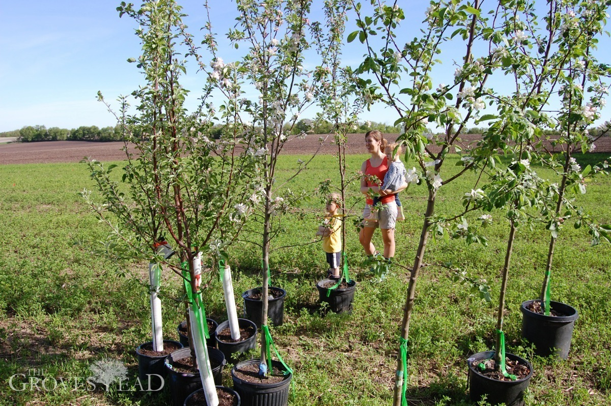 Checking out the new apple treesZestar Apple Tree