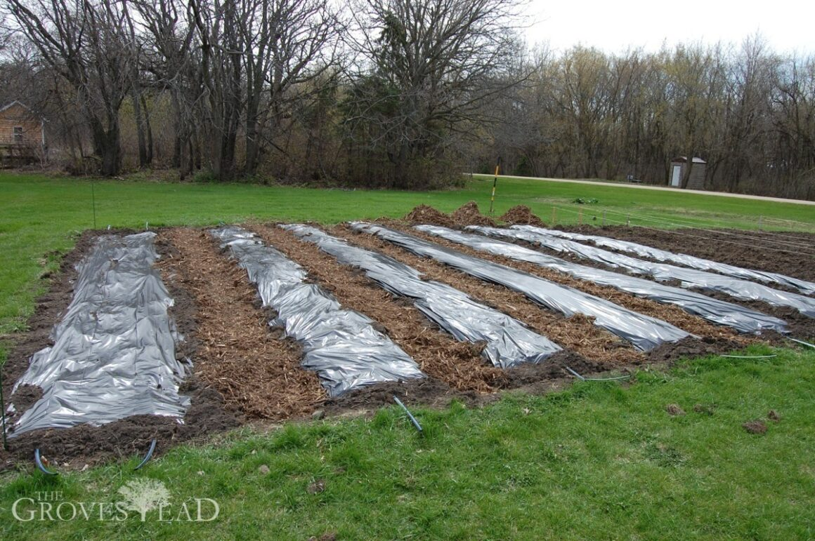 Planting more garden beds