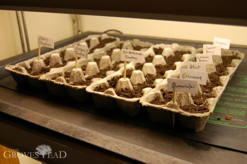 Planted seeds in egg cartons