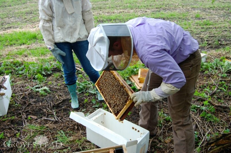 Moving bees from nuc to new hive