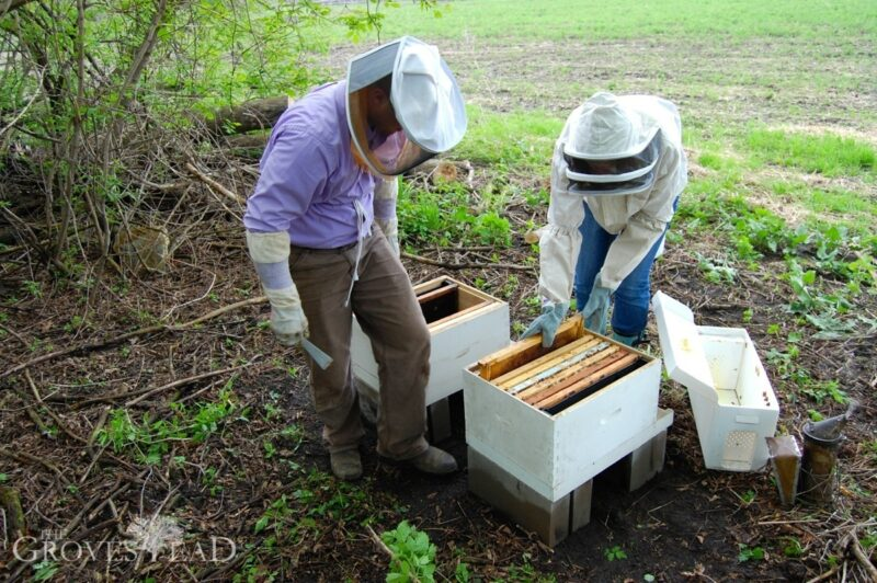 Placing additional empty frames for the bees to grow into