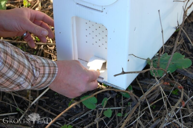 Open hatch on nuc hive
