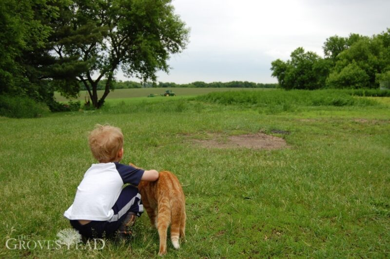 Ivar watching the tractor cut our field