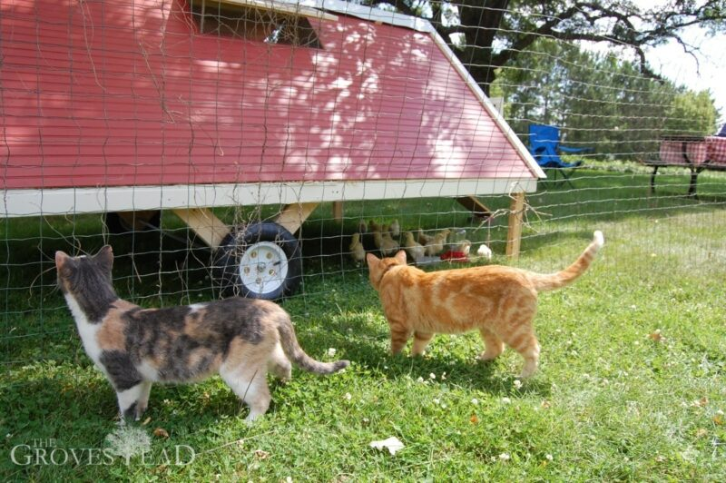 Our cats were particularly interested in the new coop