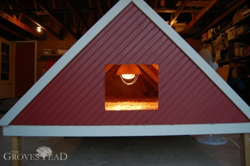 Heatlamp hung inside the mobile chicken coop to keep the baby chicks warm