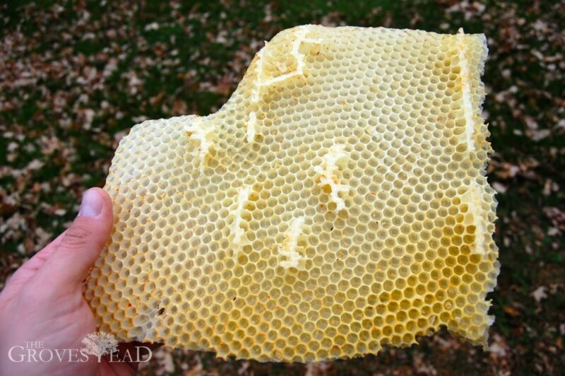 Beeswax pulled from one of the hives