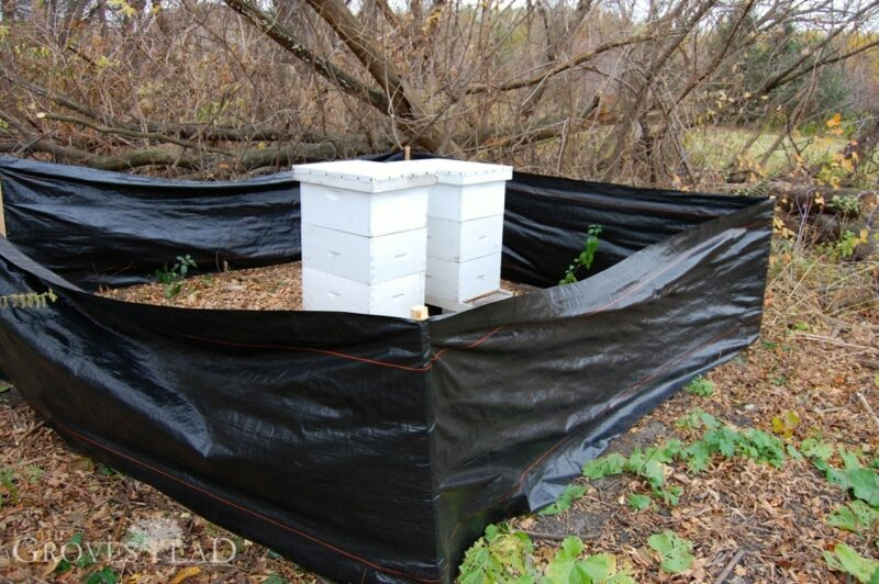 Siltfence around the hives to block snow and wind