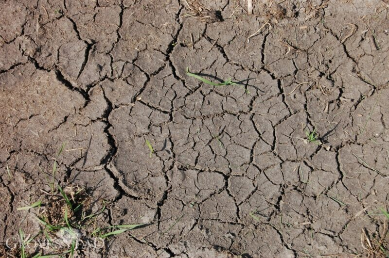 Bare soil is dry and cracked