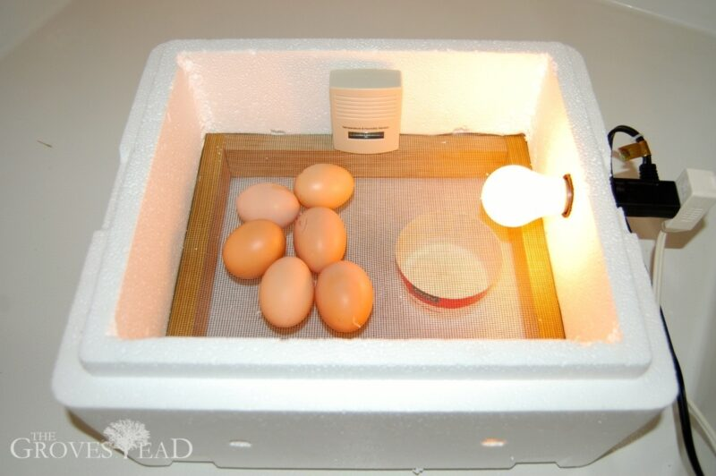 Final assembly of the egg incubator