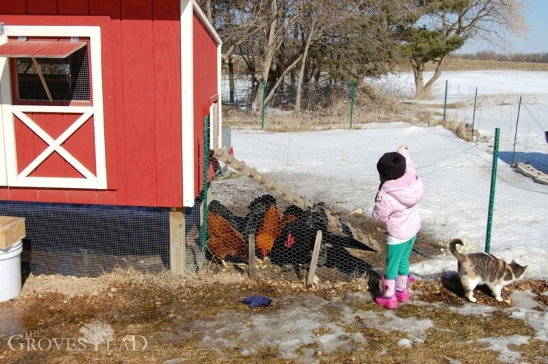 Elsie feeds the chickens outside