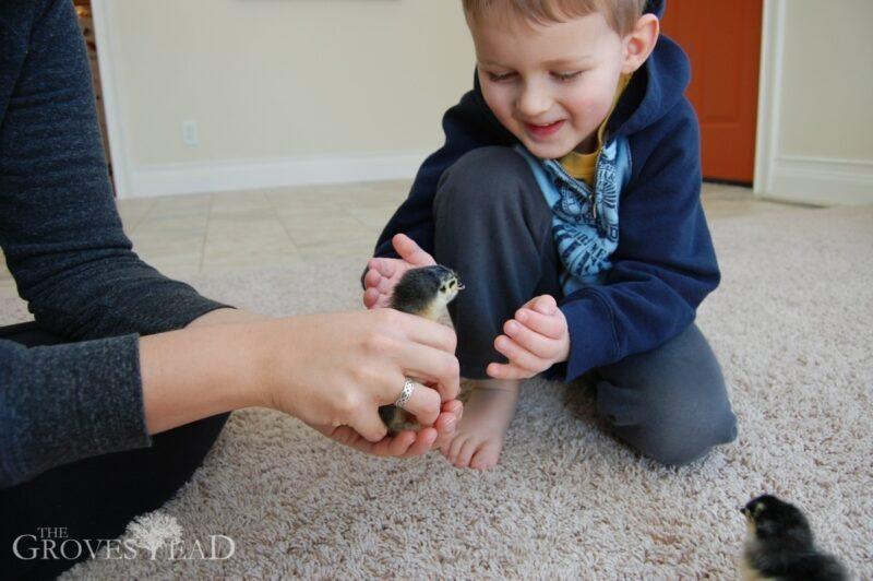 Ivar holding baby chicks