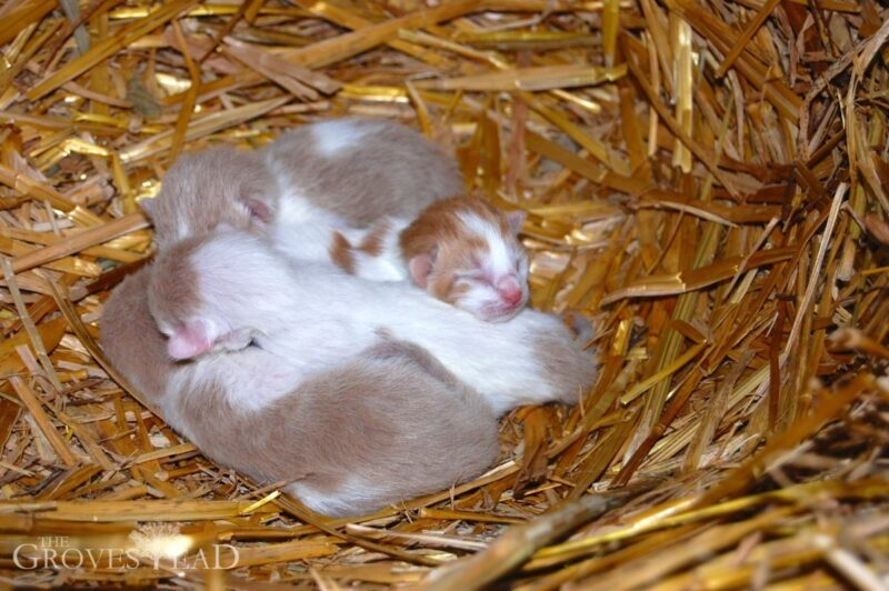 Closeup of baby kittens