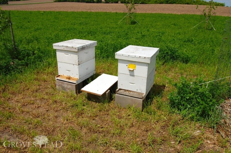 Hives moved to a sunnier location in our apple orchard
