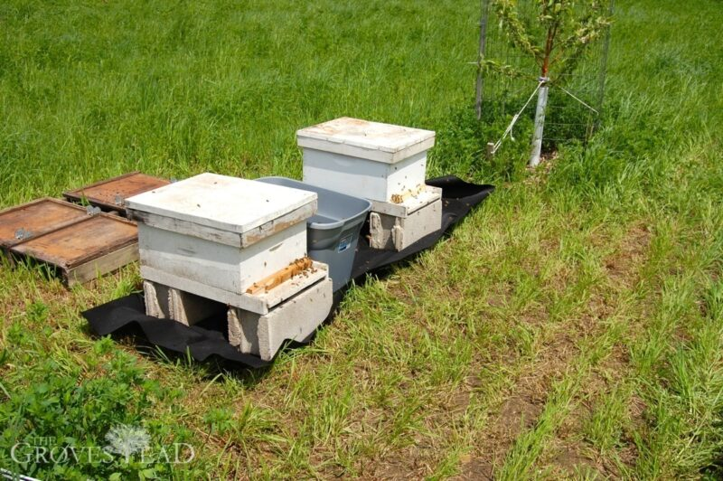 Added 2 more hives this year
