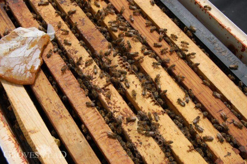 Supplementing hives with extra food, like pollen patties