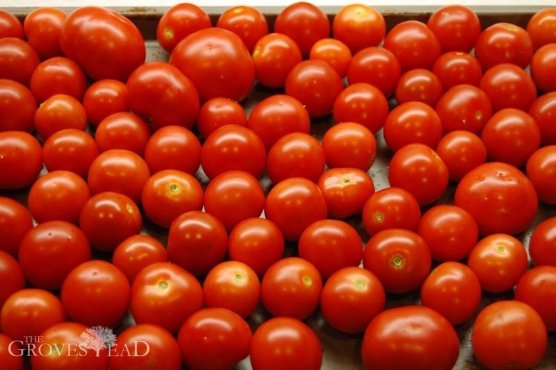 Saving heirloom tomato seeds