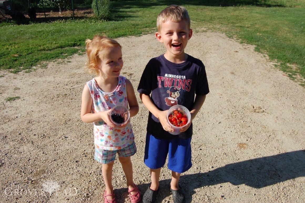Garden Update -- Blueberries & Cherries!