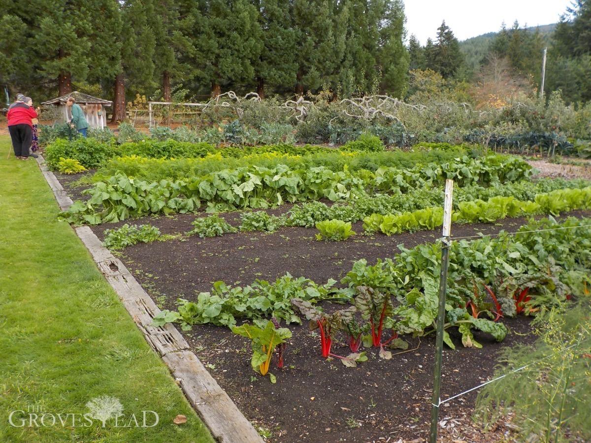back to eden gardens - Eden Garden