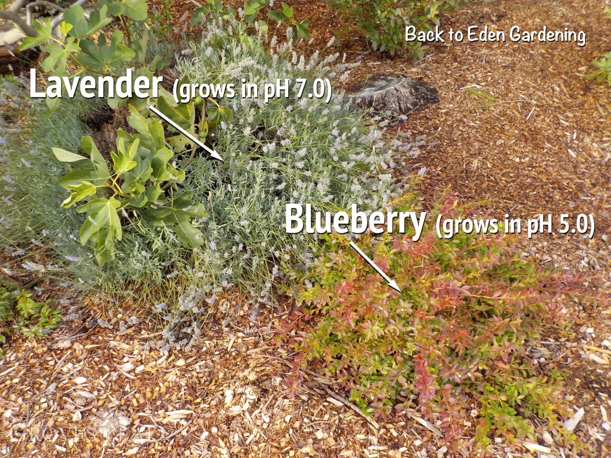 Gautschi\'s Gardens | The Grovestead