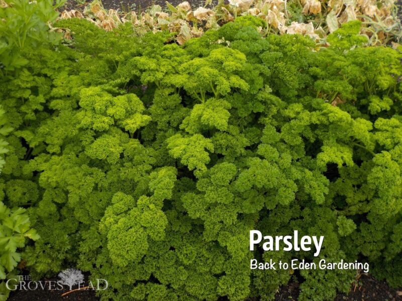 b2e_parsley