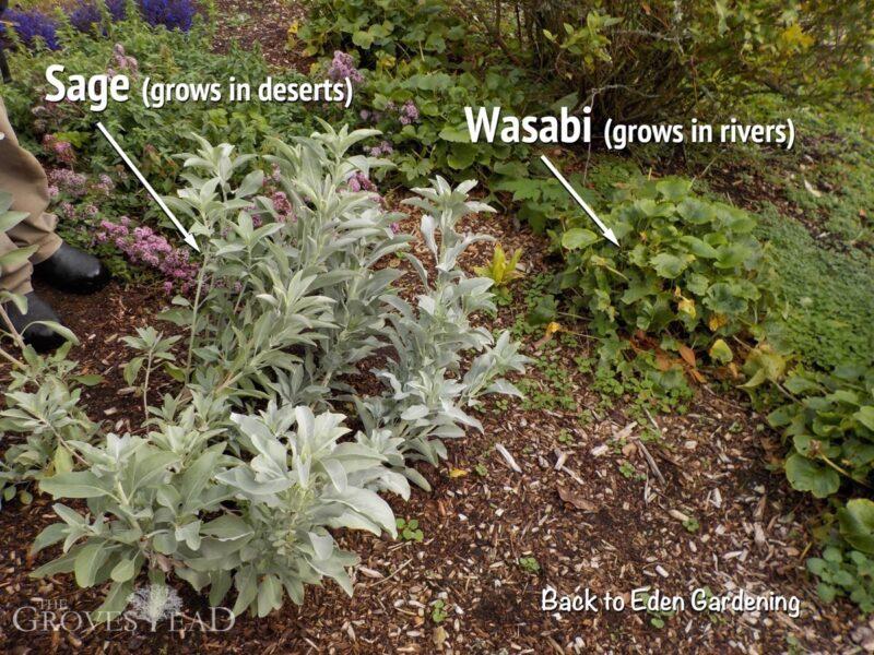 b2e_sage-wasabi