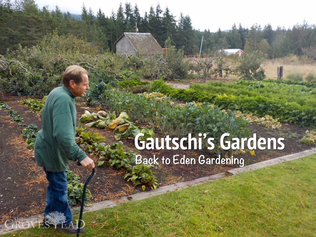 paul gautschis back to eden garden - Eden Garden