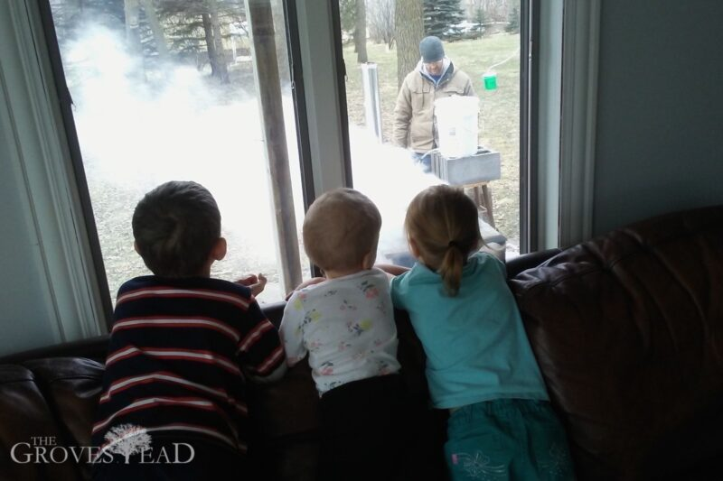Kids watching their dad evaporate maple sap