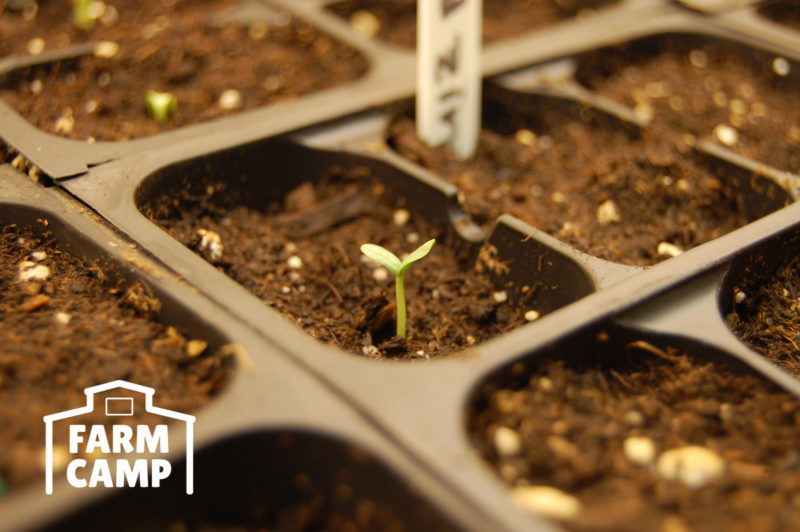 Farm Camp Seedlings Sprouting